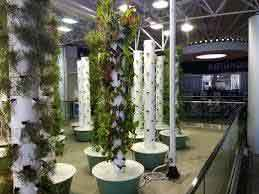 aeroponic towers
